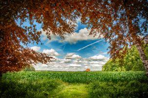 Бесплатные фото поле,небо,облака,лес,деревья,пейзаж
