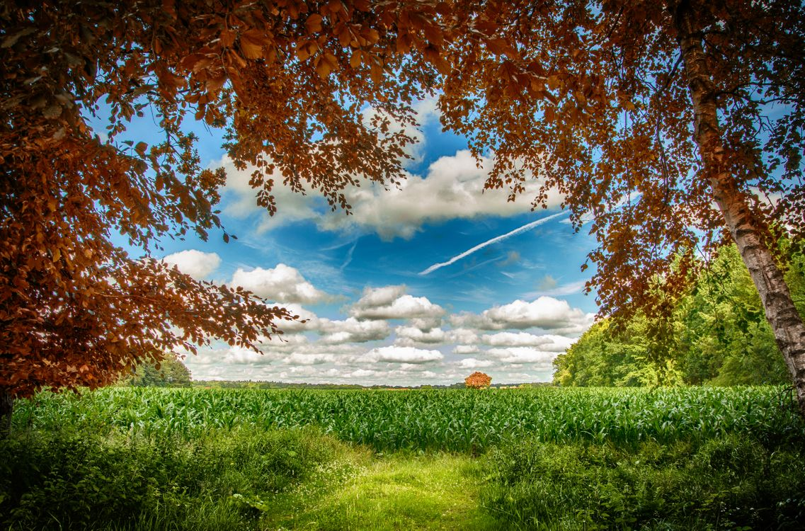 Фото бесплатно поле, небо, лес - на рабочий стол
