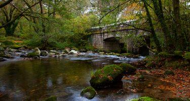 Бесплатные фото река,мост,лес,деревья,природа,мох,камни