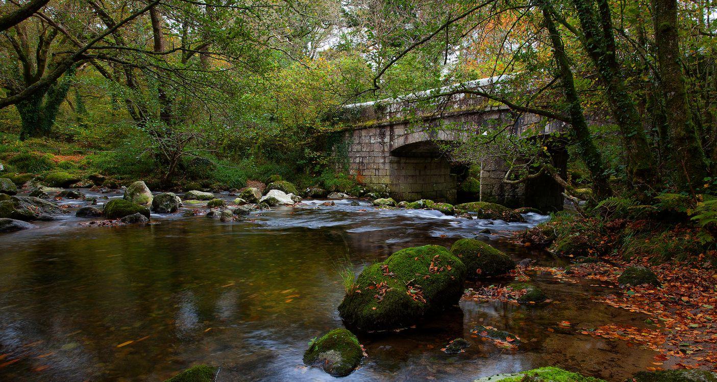 Фото бесплатно река, мост, лес, деревья, природа, мох, камни, осень, пейзаж, пейзажи