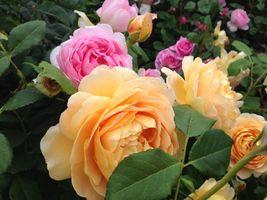 Фото бесплатно флора, роза, цветочная композиция