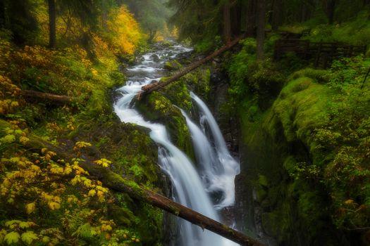 Бесплатные фото Sol Duc Falls,Olympic National Park,Washington,осень,лес,деревья,течение,водопад,природа,пейзаж