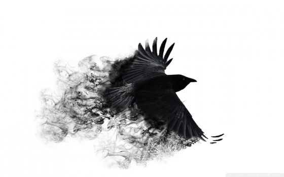 Photo free background, ravens, minimalistic