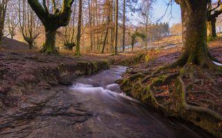 Заставки река, ручей, лес
