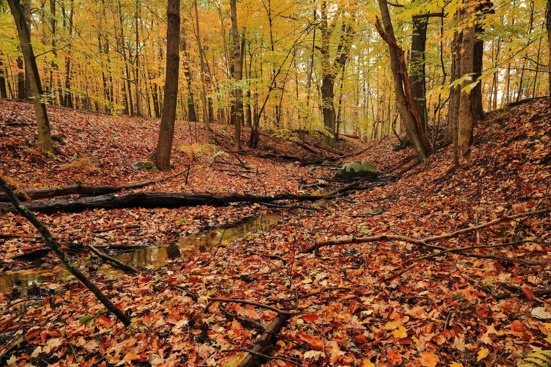 Обои осенние краски, осень, лес картинки на телефон