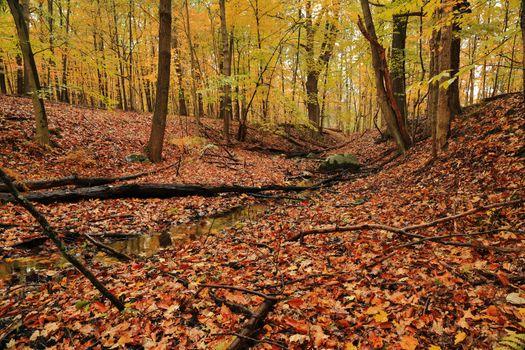 Picture, landscape, autumn colors on the phone
