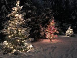 Бесплатные фото зима,ночь,снег,лес,деревья,ели,новогодняя ёлка