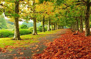 Фото бесплатно деревья, скамейки, дорога