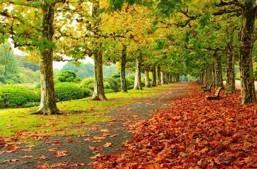 Фото бесплатно осень, парк, деревья, дорога, лавочка, листья, пейзаж