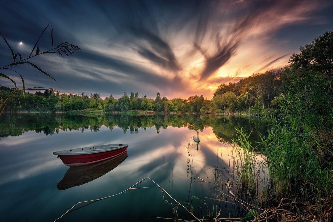 Фото бесплатно закат, озеро, лодка, лебедь, лес, деревья, природа, Йоркшир, пейзаж, пейзажи