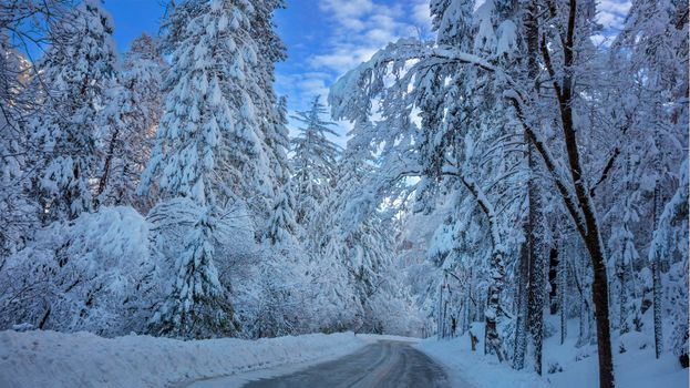 Photo free winter forest, road, trees