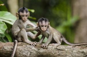 Фото бесплатно monkeys, мартышки, обезьяны