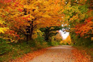 Бесплатные фото осень,лес,деревья,осенняя листва,природа,дорога,пейзаж