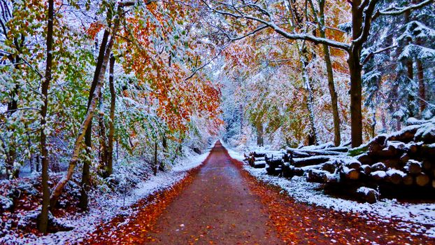 Autumn leaves covered with snow - free photo