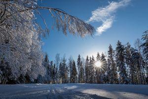 Фото бесплатно сугроб, пейзаж, деревья