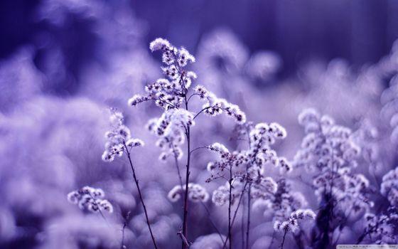 Фото бесплатно макро, цветы, природа