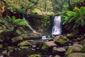 Бесплатные фото The lush Horseshoe Falls,Tasmania,водопад,камни,лес,деревья,пейзаж