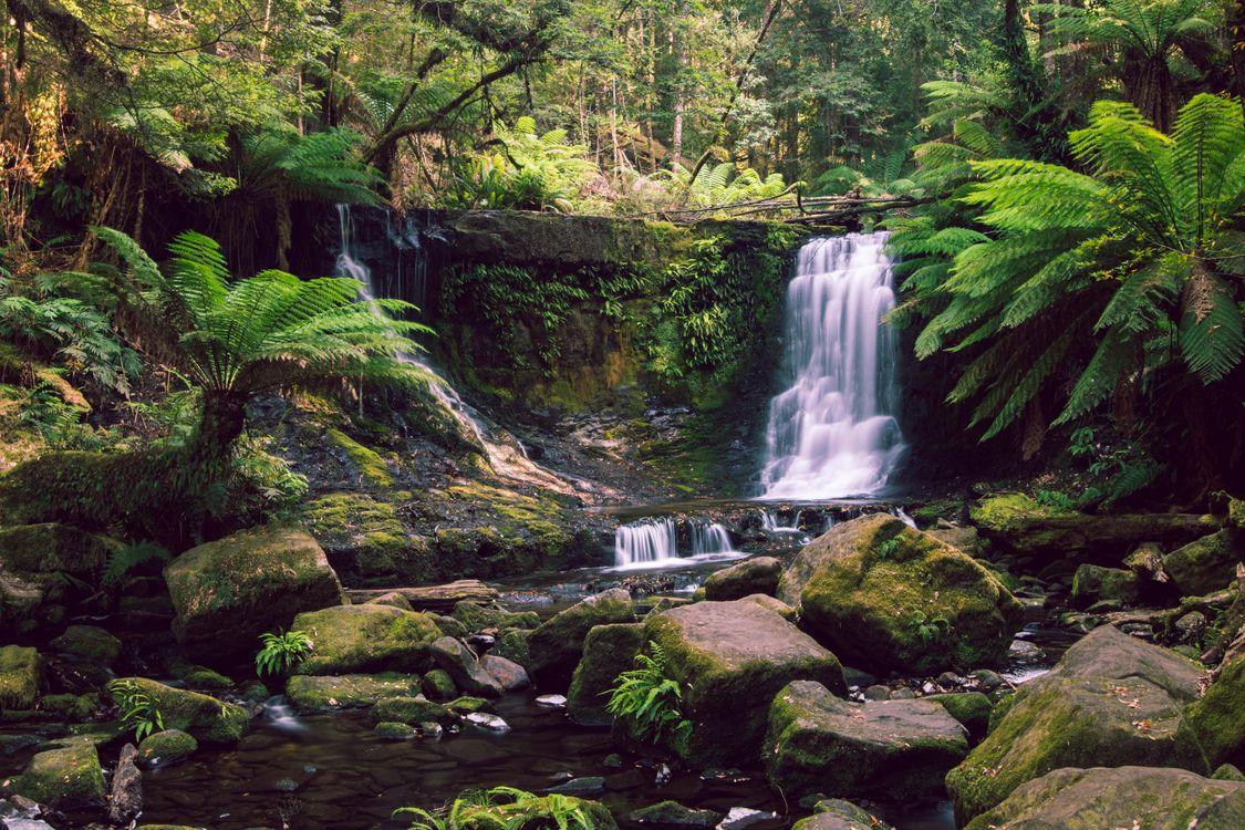 Фото бесплатно The lush Horseshoe Falls, Tasmania, водопад - на рабочий стол