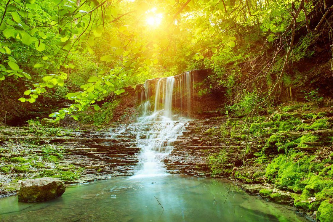 Фото бесплатно лес, ручей, солнце - на рабочий стол