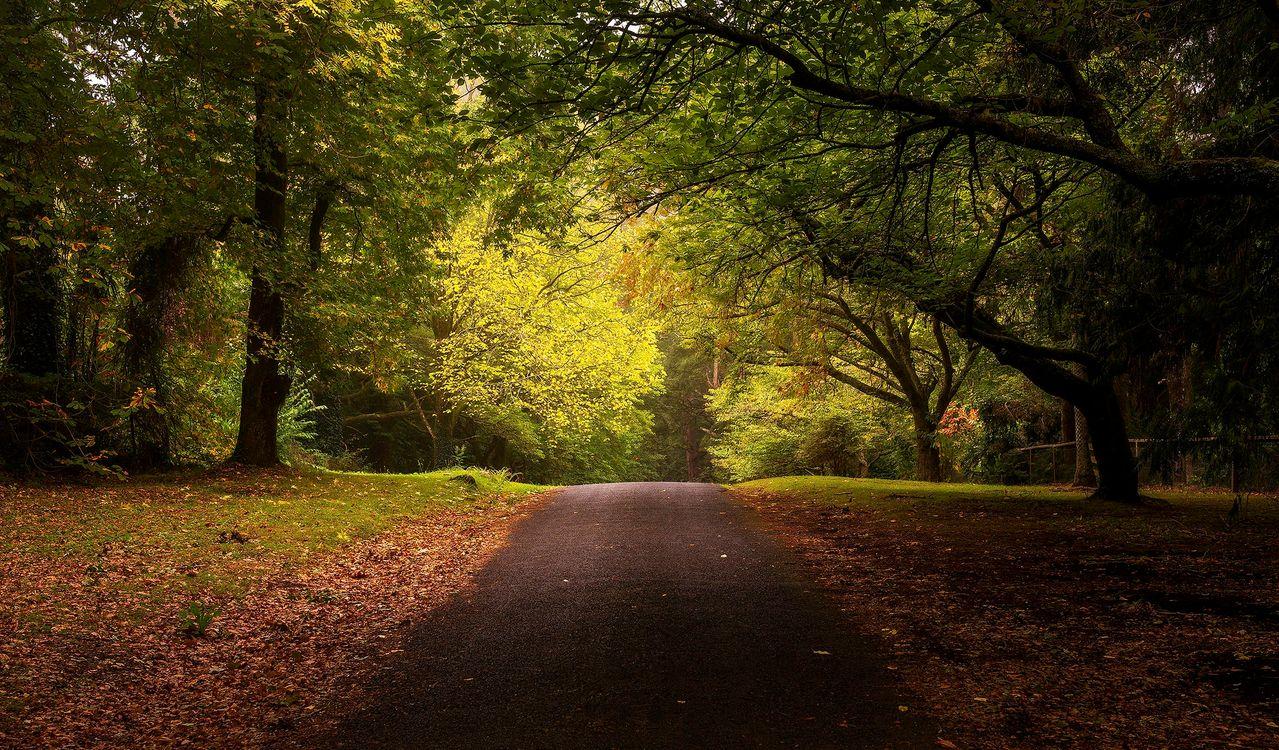 Фото бесплатно листва, осень дорога, осень - на рабочий стол