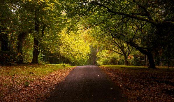 Фото бесплатно листва, осень дорога, осень