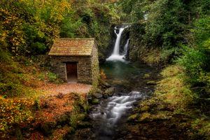 Ручей по среди леса · бесплатное фото