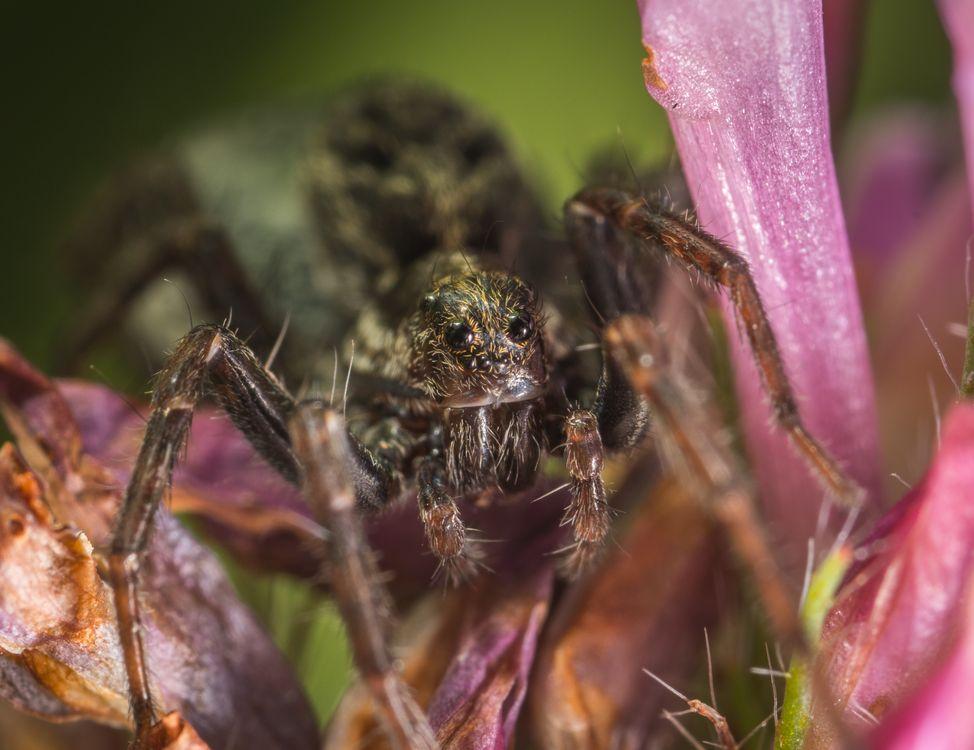 Фото паук паукообразный макрос - бесплатные картинки на Fonwall