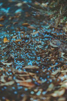Фото бесплатно осень, размыто, боке