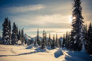 Фото бесплатно Гора Ренье Национальный парк, зима, природа