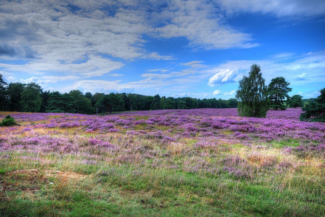 Фото бесплатно поле, цветочное поле, небо, облака, цветы, лаванда, дерево, природа, пейзаж, пейзажи