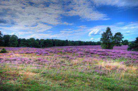Бесплатные фото поле,цветочное поле,небо,облака,цветы,лаванда,дерево,природа,пейзаж