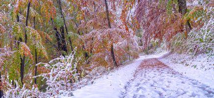 Бесплатные фото зима,осень,лес,деревья,дорога,снег,осенние листья