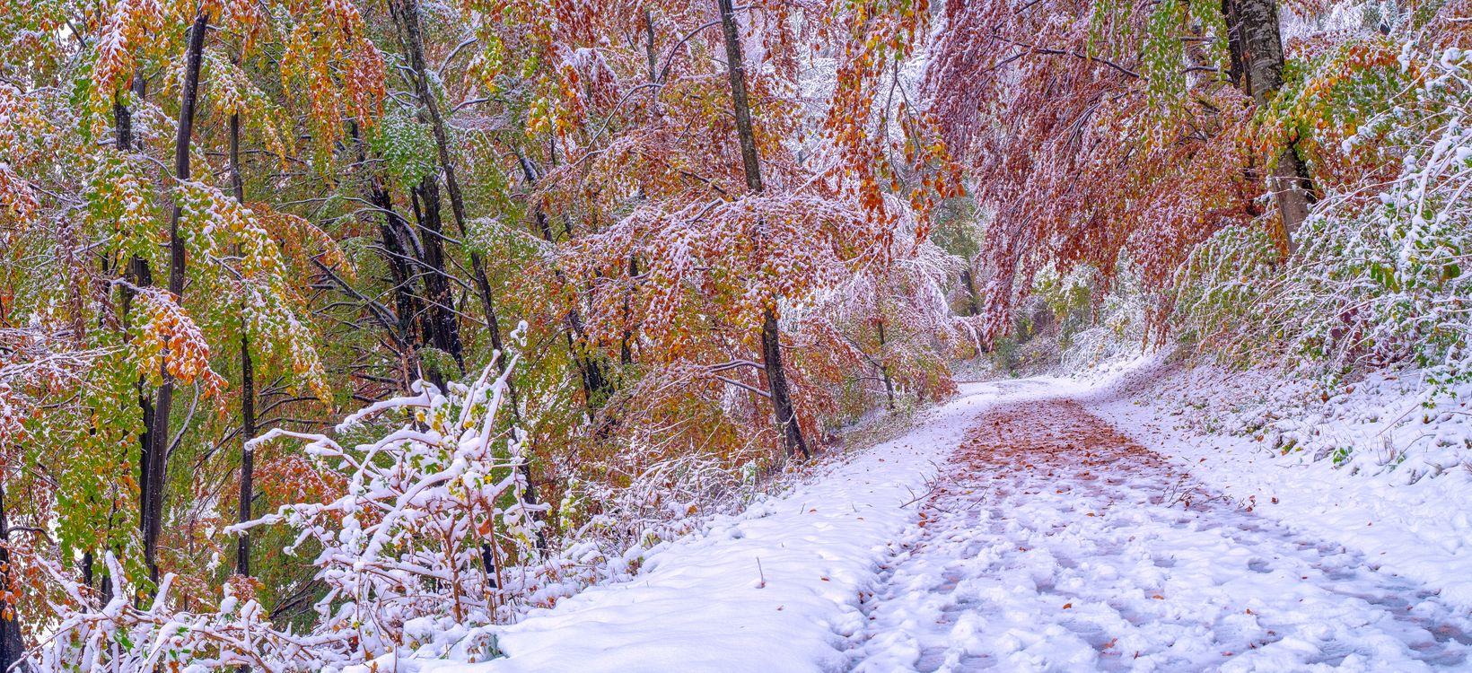 Фото бесплатно зима, осень, лес, деревья, дорога, снег, осенние листья, осенние краски, природа, пейзаж, панорама, пейзажи
