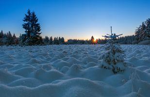 Зимний восход и елочки