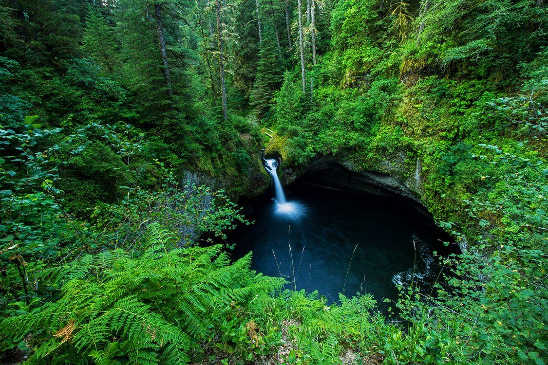 Уютное гнездышко в лесу · бесплатное фото