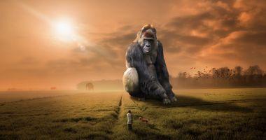 Заставки горилла, обезьяна, примат