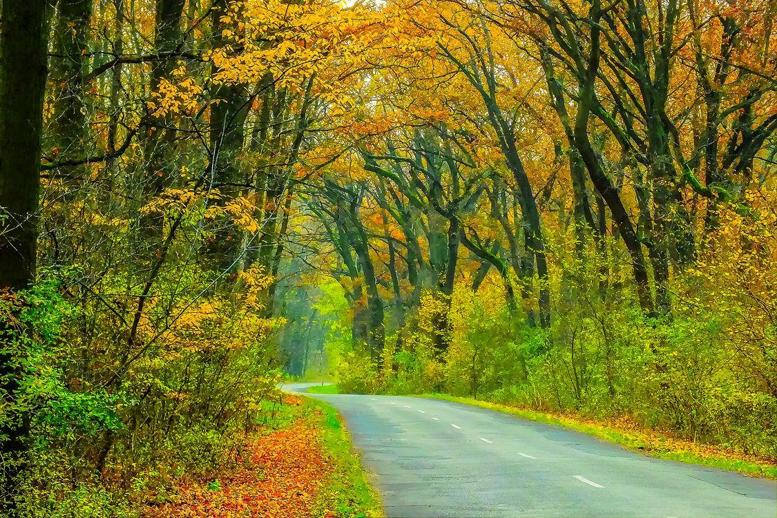 Фото бесплатно краски осени, осень, природа - на рабочий стол