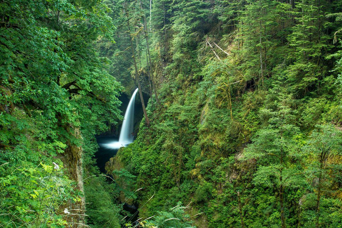 Фото бесплатно Metlako Falls, Columbia River Gorge, водопад, ущелье, лес, деревья, пейзаж, пейзажи - скачать на рабочий стол