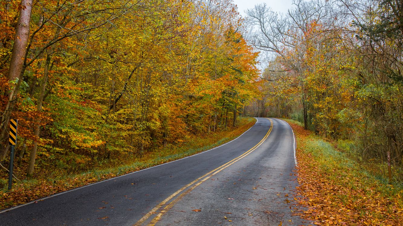 Обои осень, дорога, лес картинки на телефон