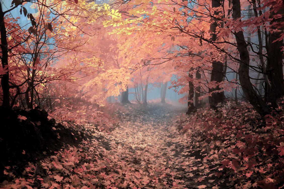 Обои туман, осенние листья, деревья картинки на телефон