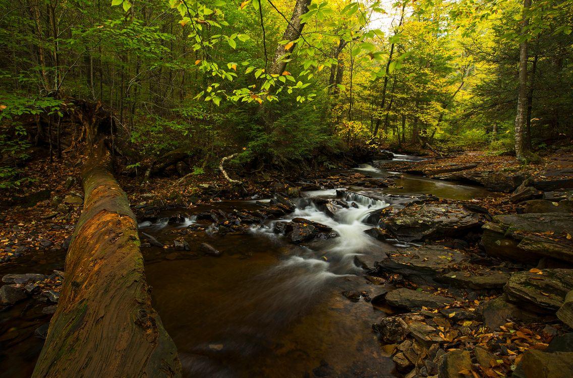 Фото бесплатно осень, водопад, лес, скалы, деревья, водоём, природа, поток, вода, камни, пейзаж, природа