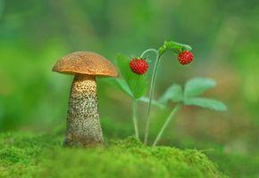 Фото бесплатно ягодные, подосиновик, клубника