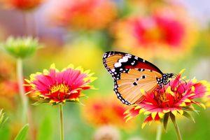 Фото бесплатно макро, поле, флора