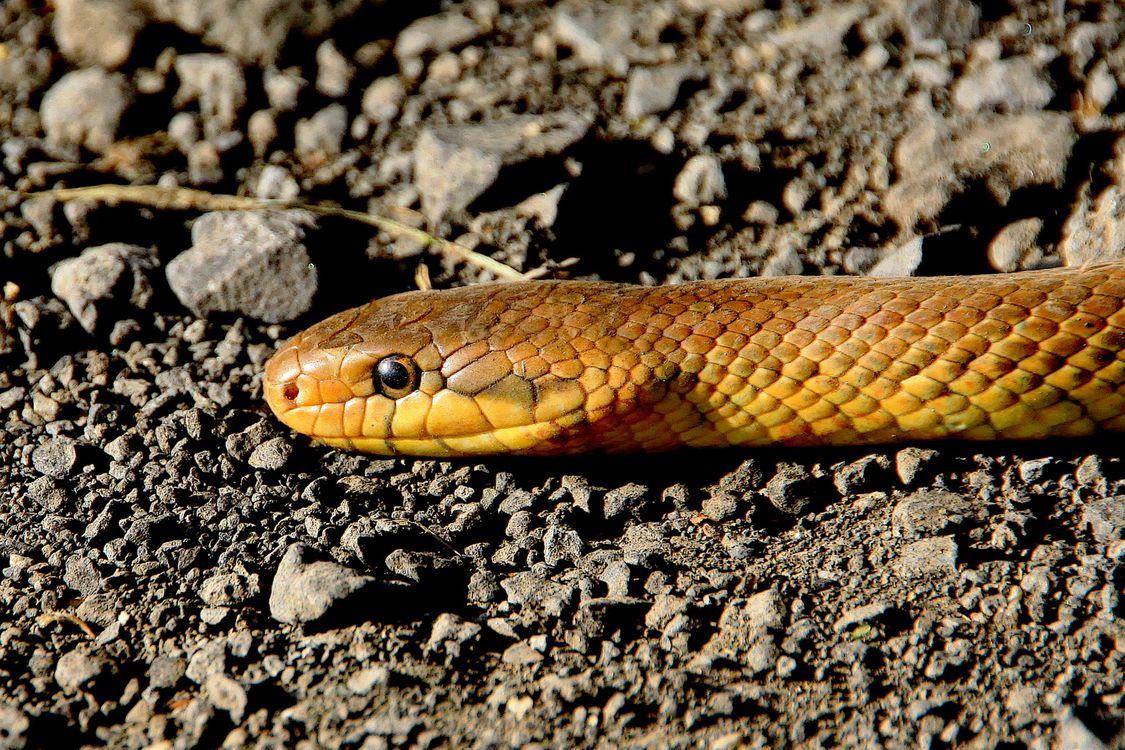 Фото природа дикая природа рептилия - бесплатные картинки на Fonwall
