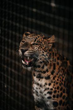 Photo free cheetah, big cats, predator