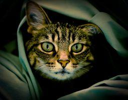 Фото бесплатно вид, животное, кошка