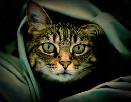 Фото бесплатно кот, кошка, морда, взгляд, животное