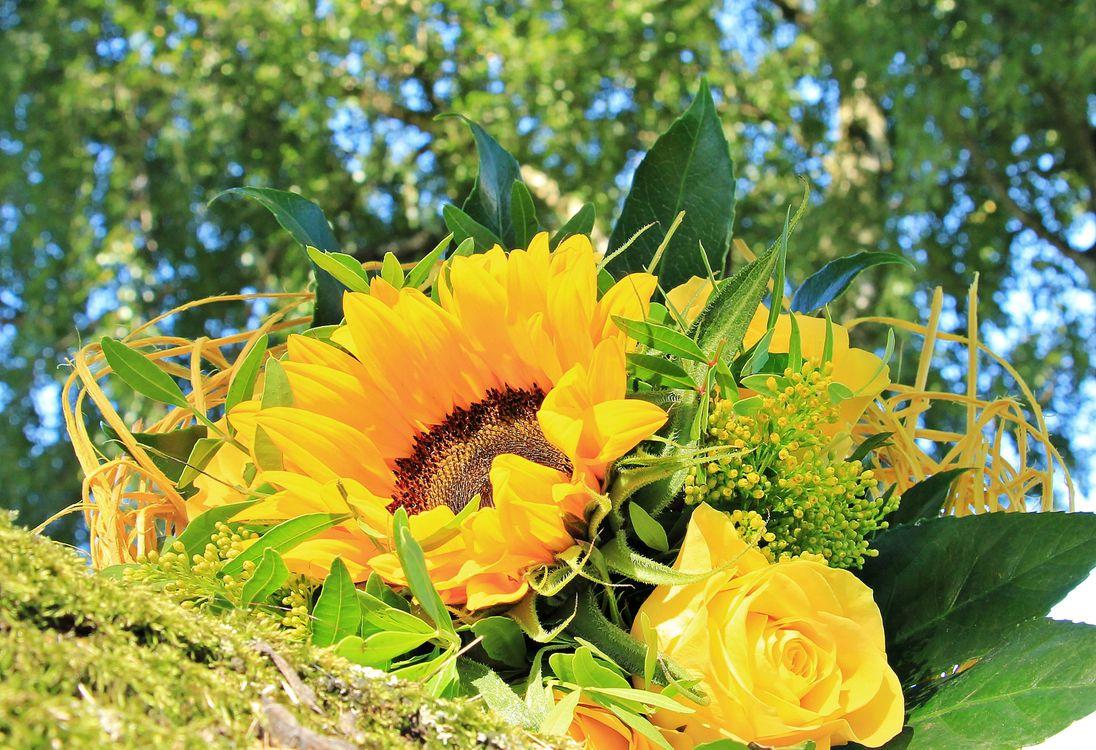Фото бесплатно Красивый букет, букет, цветочная композиция, флора, цветы, цветок, цветочный, оригинальный, красочный, праздничный букет, подсолнух, роза, цветы