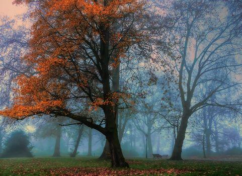 Photo free trees, morning, fog