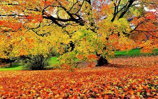 Photo free trees, autumn colours, autumn leaves